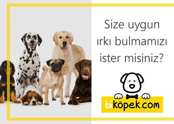 Özel Vitrin Alanı - bikopek.com