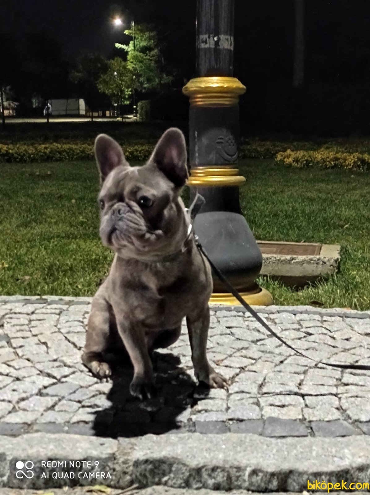 Brindle French Bulldog Bebekler 2