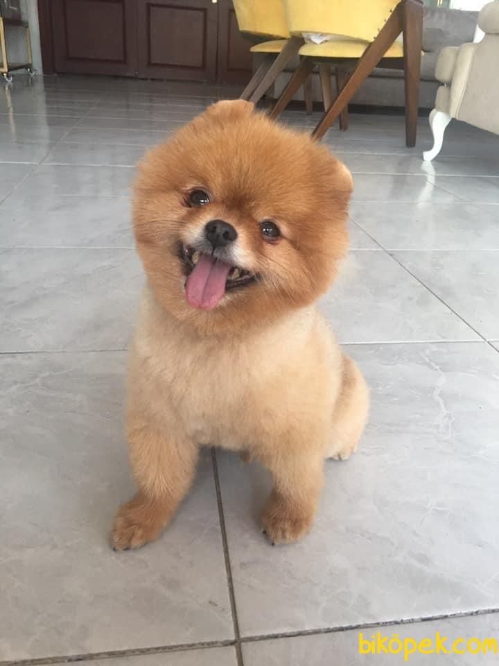 Tedy Bear Boo Oğlumuz 2