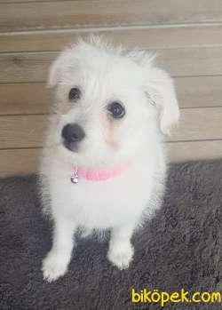 0 Numara Terrier Bebekler 3