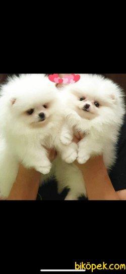 İkiz Teddybear Kızlar