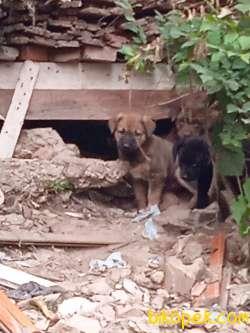 Köpek Sokak Köpeği Ama Köpekler Sağlıklı Sahiplendiricem 1