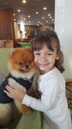 Orjinal Pomeranian 1