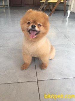 Tedy Bear Boo Oğlumuz 3