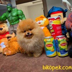 Yarışma Düzeyi Anne-Baba'dan MiniBoy Boo