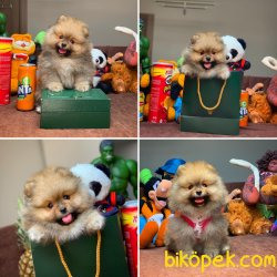 Yarışma Düzeyi Anne-Baba'dan MiniBoy Boo Yavruları