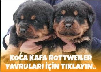 Özel Reklam Alanı - bikopek.com
