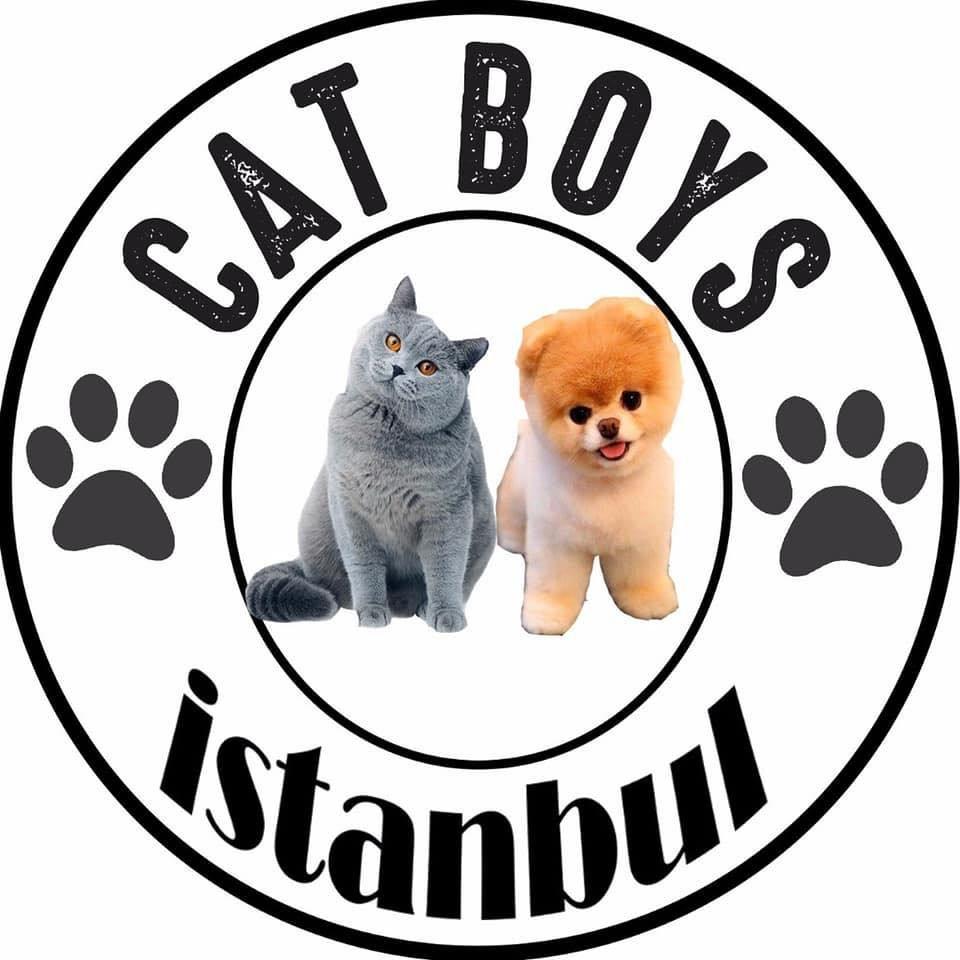 catboys