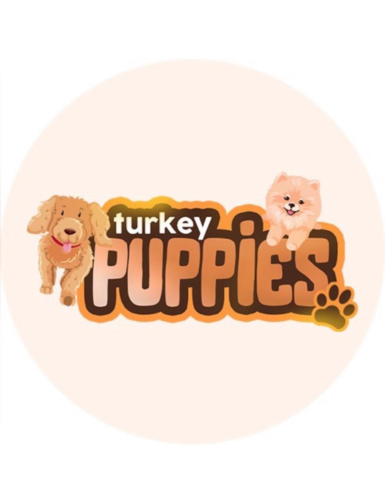 turkeypuppies
