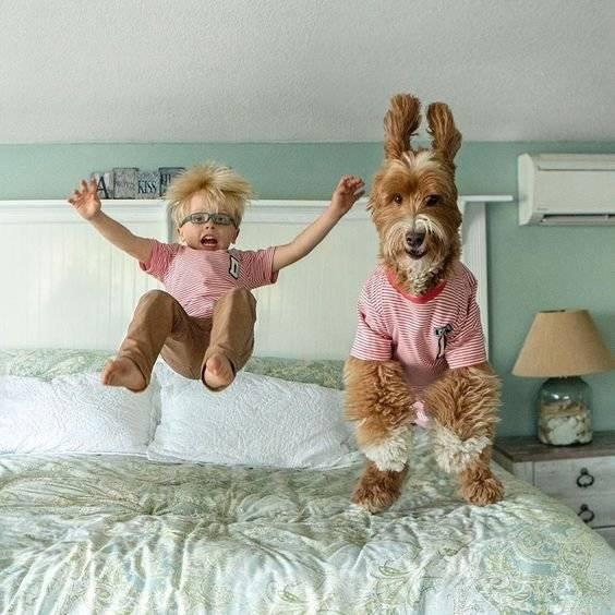 Çocuklar ve Köpekler