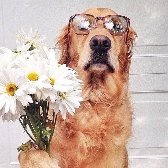 En Akıllı Köpek Irkları