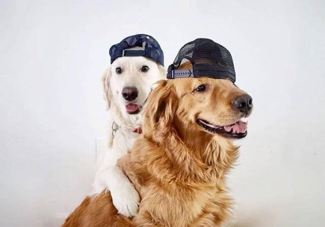 Köpeklerde Üreme ve Kısırlaştırma