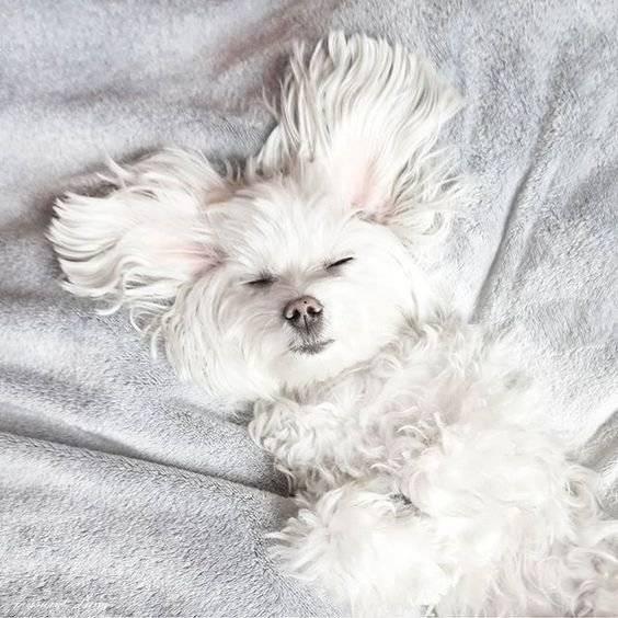 Köpekler ve Apartmanda Yaşam