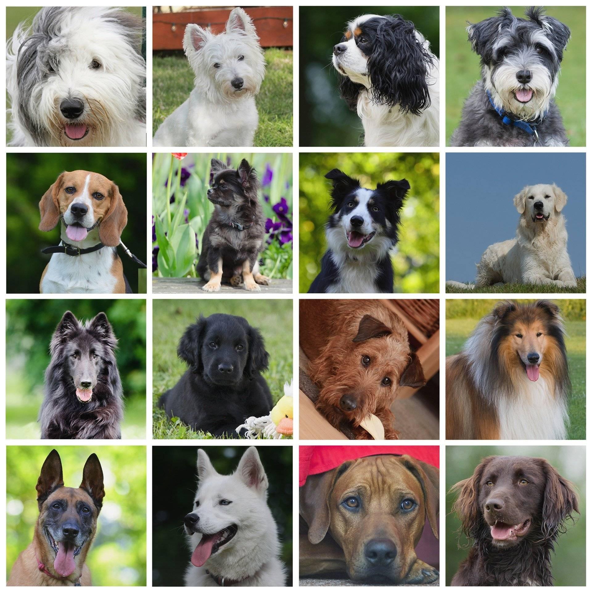 Köpek Fiyatları Cinslere Göre Değişkenlik Gösterir Mi?